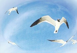 Gulls in a Globe