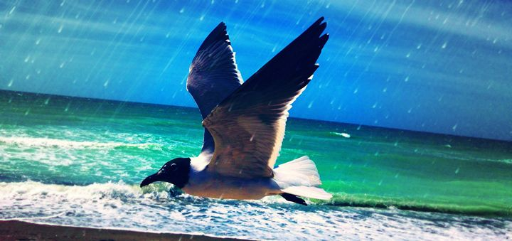 RainBird - Scoops