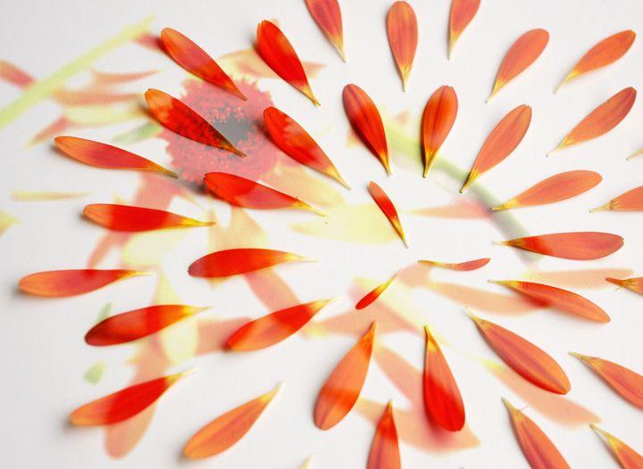 Orange petals - Beth Wilson