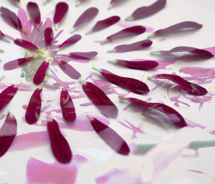 Purple petals - Beth Wilson
