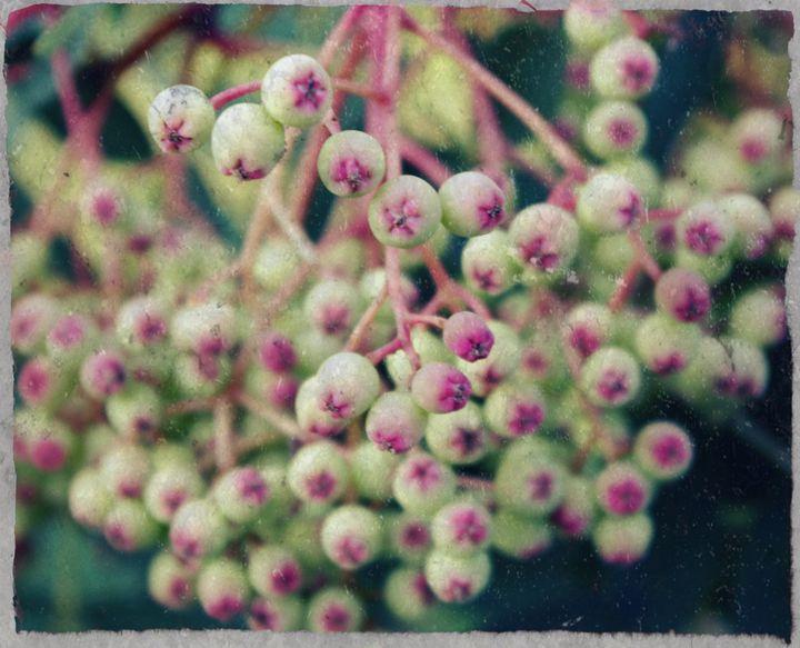 Textured berries - Beth Wilson
