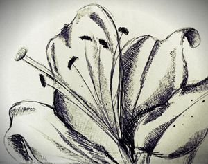Lily petals - Beth Wilson