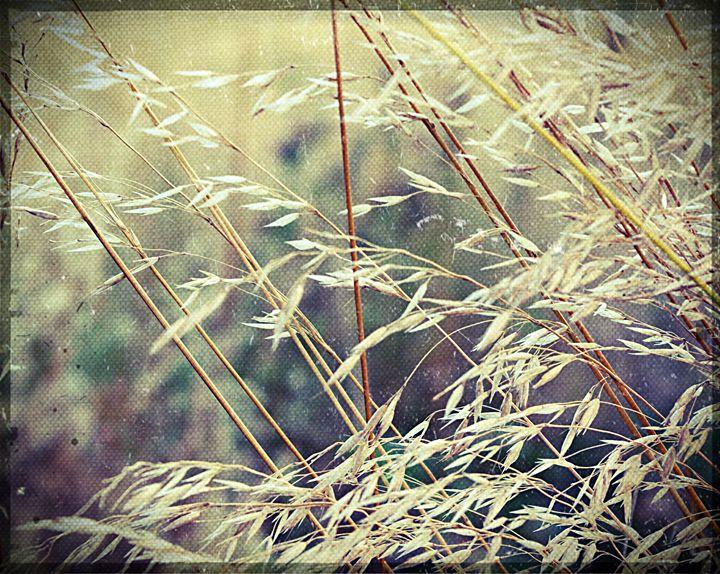 Corn field - Beth Wilson