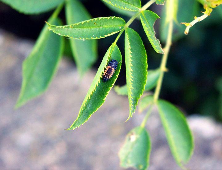 A comfortable bug life - Beth Wilson