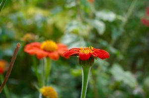 One photogenic flower