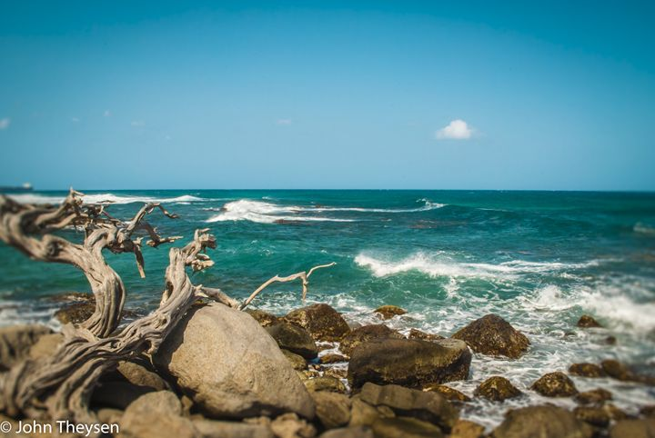 Old tree and Waves - Aruba Scenes