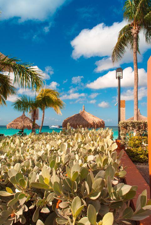 Tropical feel - Aruba Scenes
