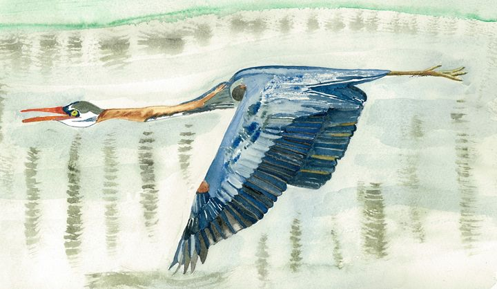 Great Blue Heron - MK Nature Design