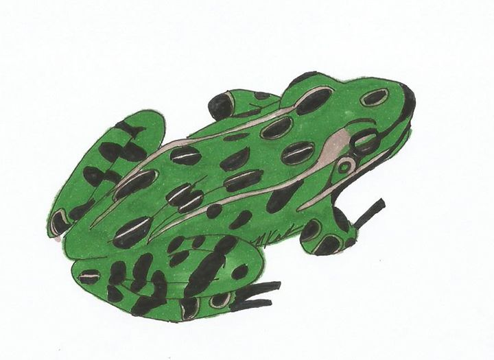 Green Frog - MK Nature Design