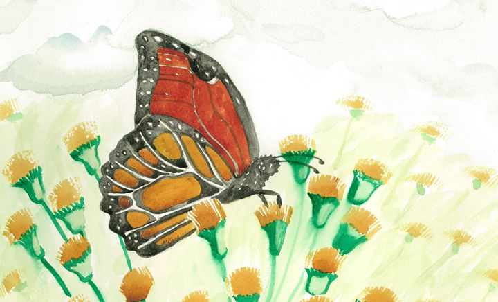 Monarch in Devil's Paint Brush Patch - MK Nature Design