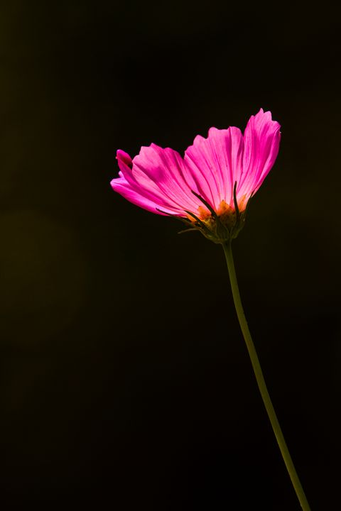 Flower portrait - Sajith Kariadan