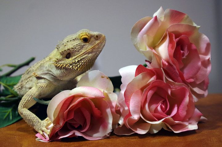 Rose Dragon - Katie Truppo Photography