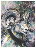 The Big Horn Sheep.