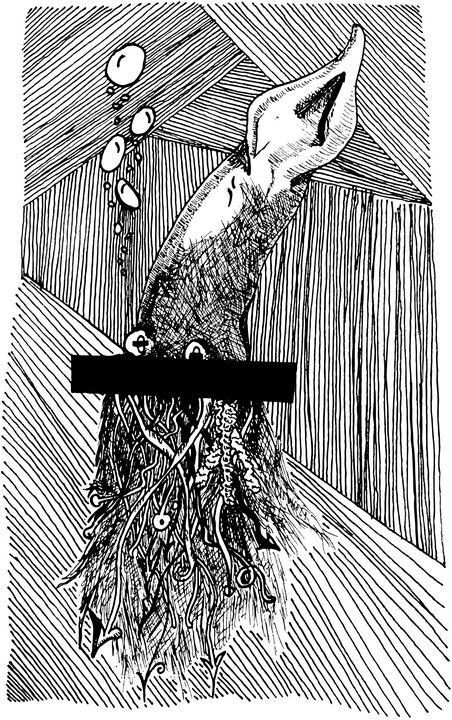 Squid - Andrei Anghelescu