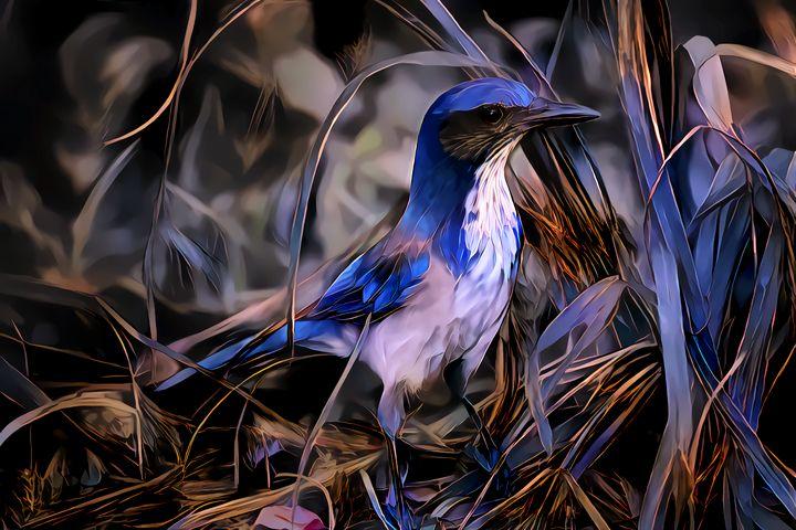 Blue Jay - Artly Studio