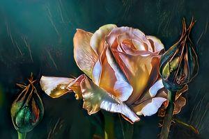 The Rose. Minas' Trove.