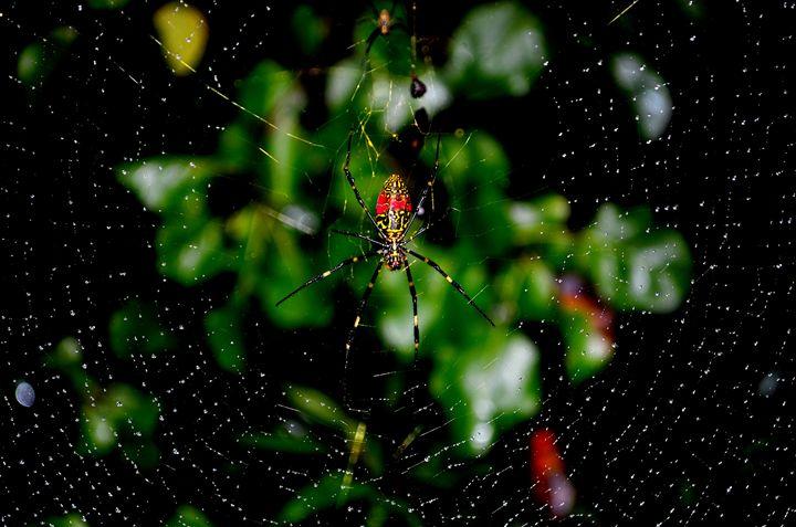 Spider Web - Cramer Design Studio