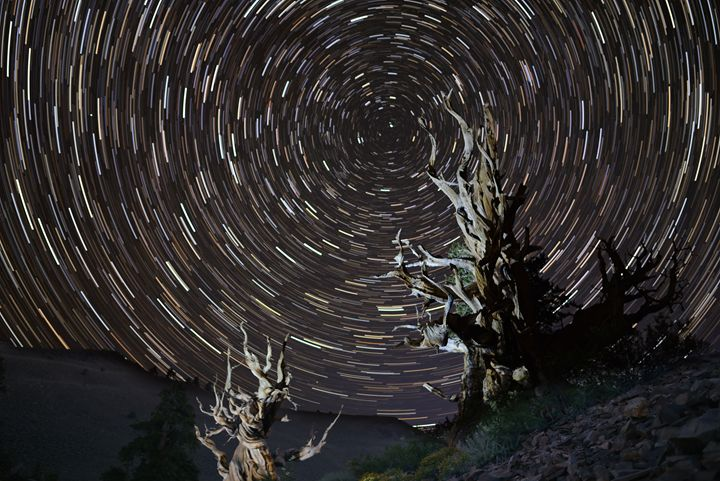 Star Trails over Methuselah - Photography by Nao Tharp