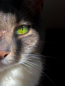 Green eye cat - Dimas Photographer
