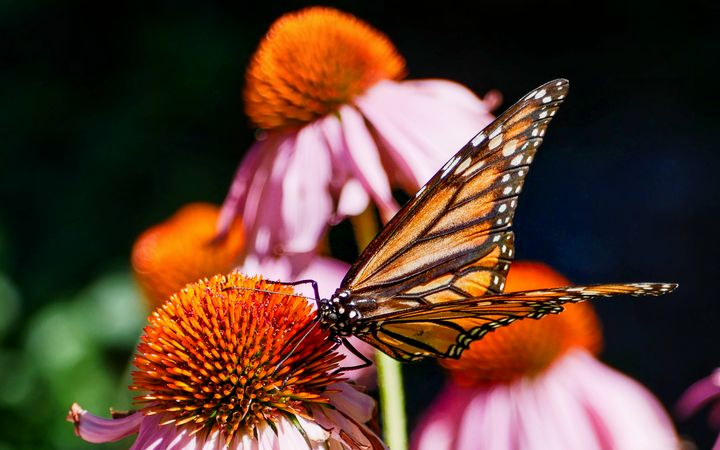 Andersonville Busy Butterfly - Dimas Photographer