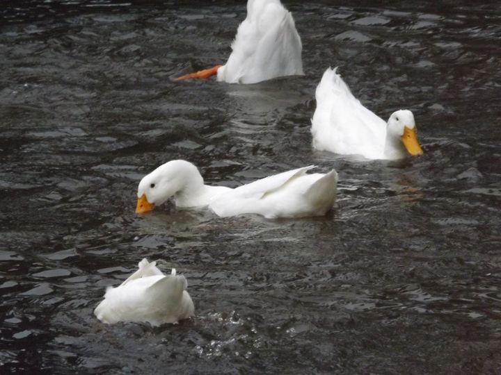 Pond Ballet - KatyNicole photography