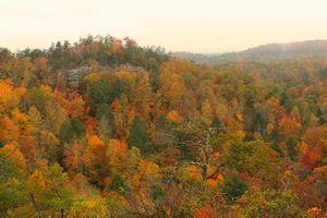 Tennessee Fall - B.Matt.
