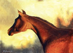 Red Arabian Horse