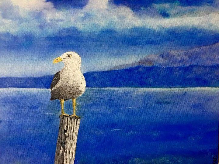 Solo Gull - Scott greene