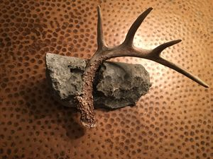Antler and stone1