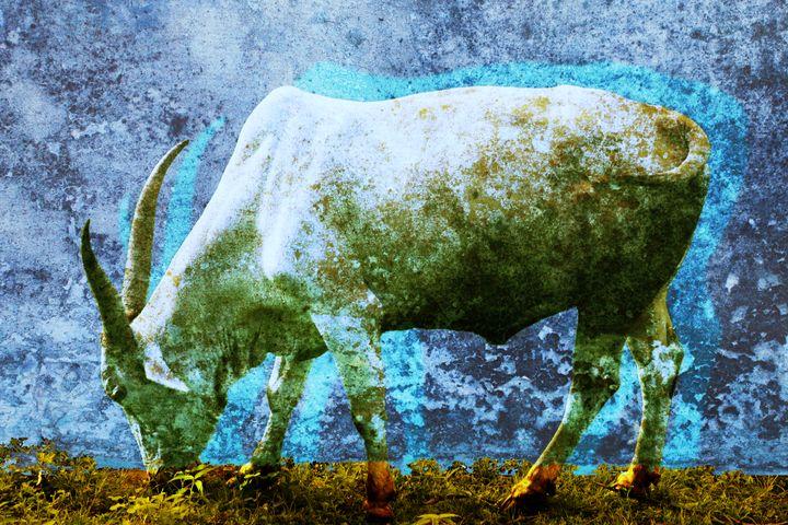 Cow#2 - Peter Sazerman