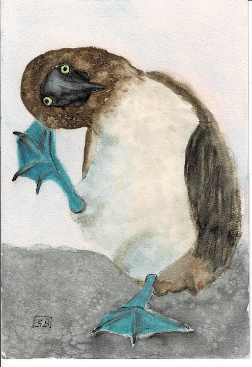Blue Footed Booby - Susan Burns