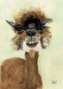 Evvy the Alpaca - Susan Burns