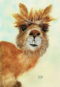 Gertie the Alpaca - Susan Burns
