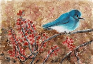 Mountain Bluebird in Minnesota - Susan Burns
