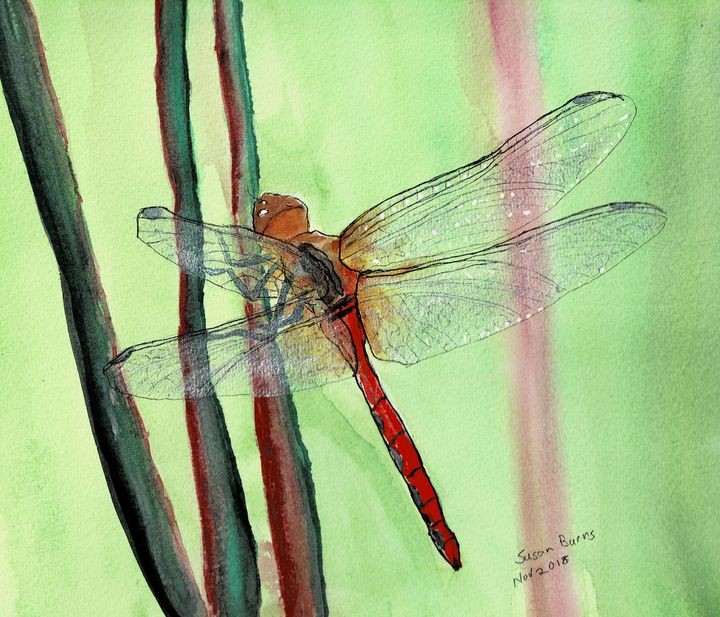 Dragonfly - Susan Burns