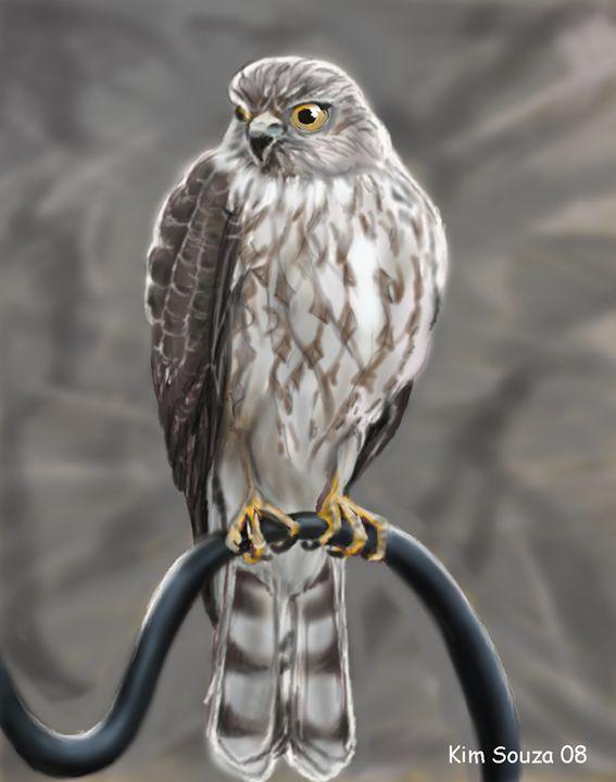 Hawk - Kim Souza Artist