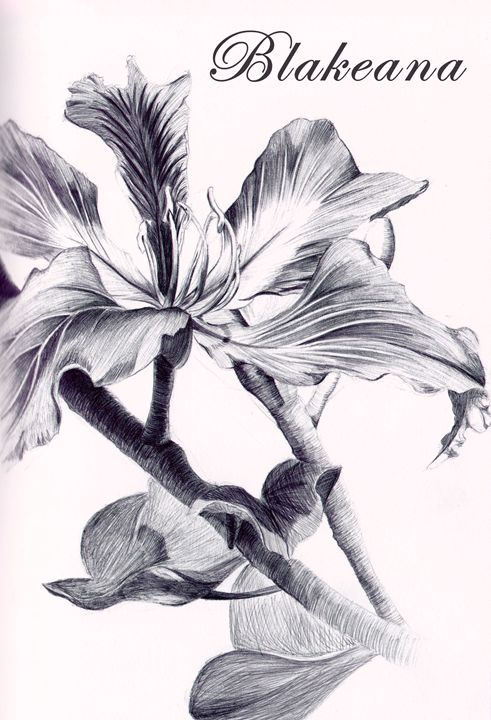 Blakeana - Godie Art