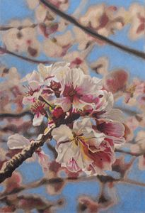 Pencil Drawing Cherry Blossom