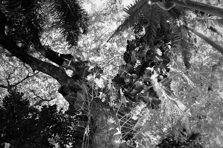 Rainforest - Stella