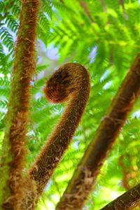 Tree Fern - Stella