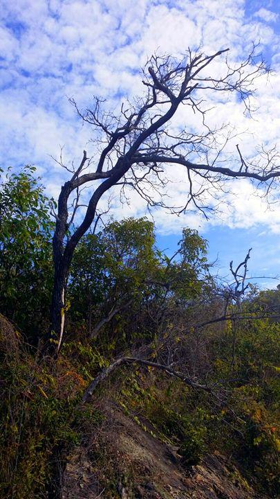 Slope Tree - Stella