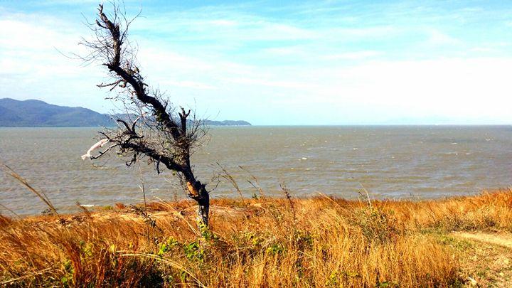 Dead Tree on Shelley Beach - Stella