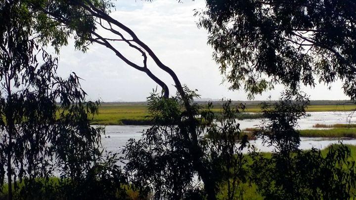 Town Common Wetlands - Stella