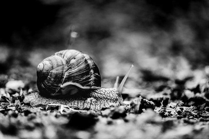 Slowly Ahead - Michal Jesensky