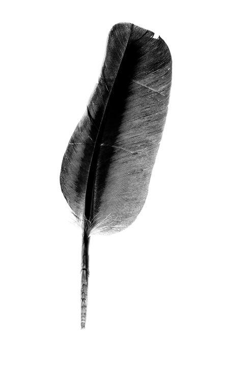 Feather - Michal Jesensky
