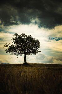Tree of storm