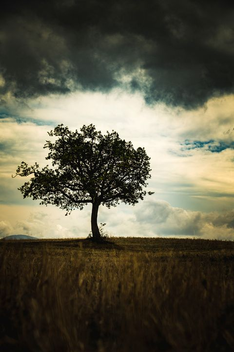Tree of storm - Michal Jesensky