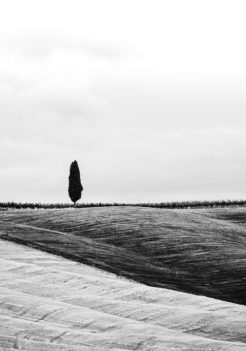 Lone cypress - Michal Jesensky
