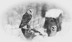 Winter Guardians - Michal Jesensky