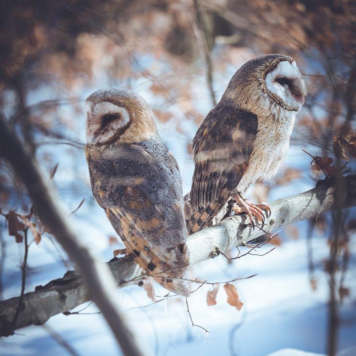Love Birds - Michal Jesensky